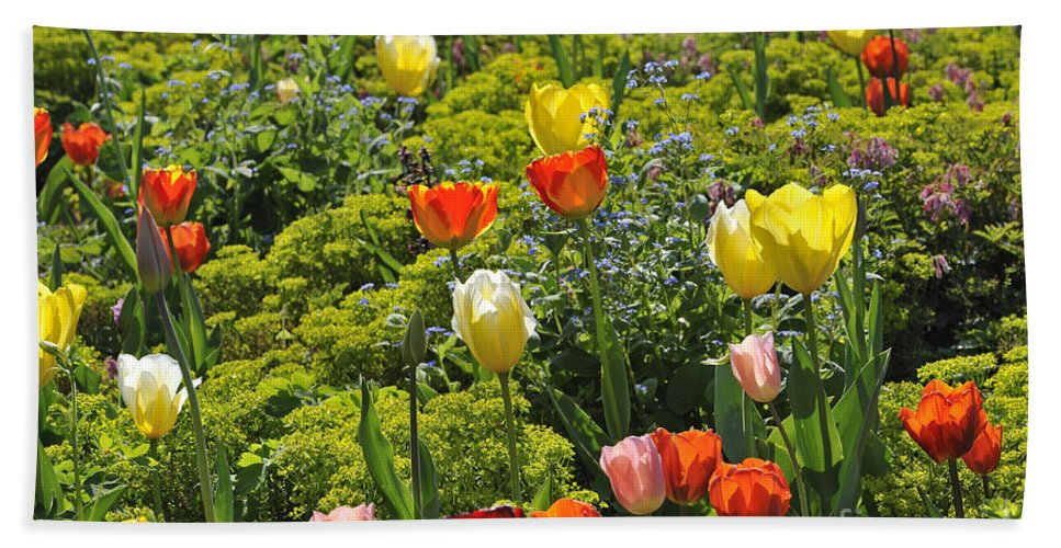 Colourful Beach Towel featuring the photograph 090811p128 by Arterra Picture Library