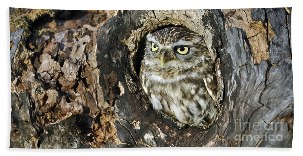 Little Owl Beach Towel featuring the photograph 090811p320 by Arterra Picture Library