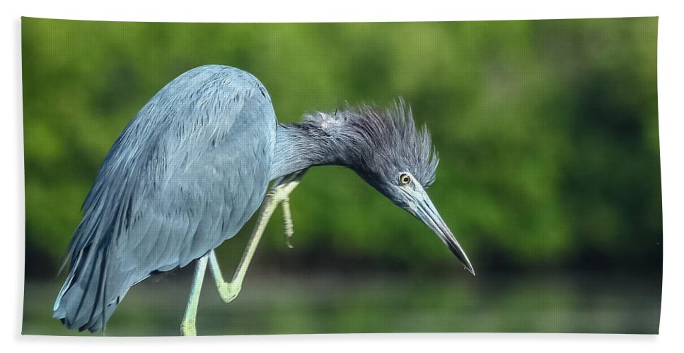 Florida Beach Towel featuring the photograph Bad Hair Day by Jane Luxton