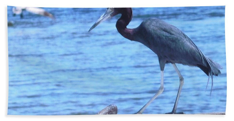 Matlache Fl. Beach Towel featuring the photograph Blue Heron by Robert Floyd