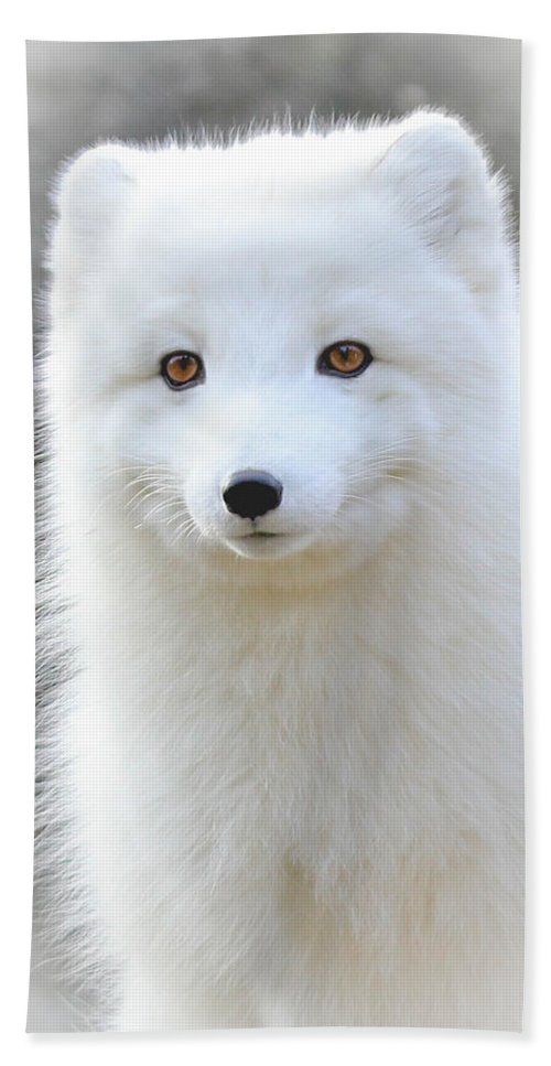 White Fox Beach Towel featuring the photograph Bright Eyes by Athena Mckinzie