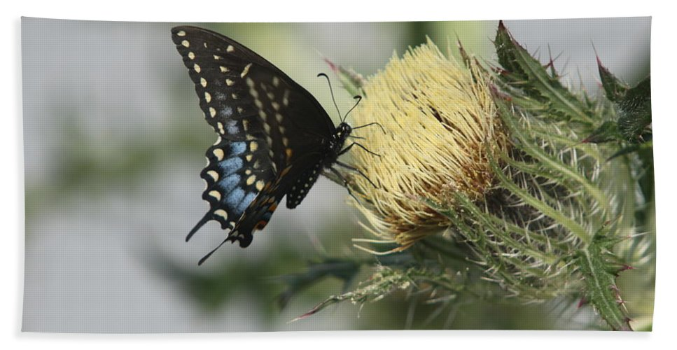 Thistle Beach Towel featuring the photograph Butterfly On Thistle by Christiane Schulze Art And Photography