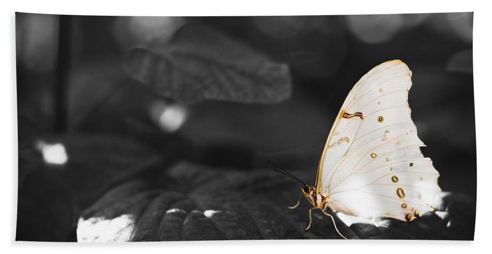 Florida Beach Towel featuring the photograph Butterfly by Bradley R Youngberg