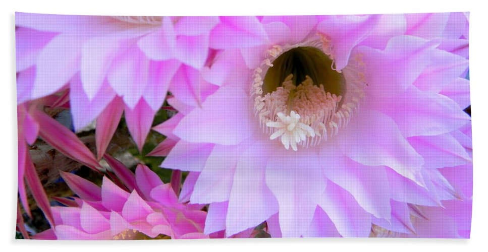 Pink Flowers Beach Towel featuring the photograph Cactus Flowers by Sara Gravely- Comstock