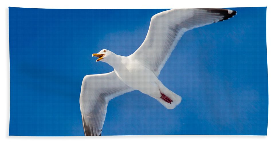 Larus Beach Towel featuring the photograph Calling Herring Gull Flying In Blue Sky by Stephan Pietzko