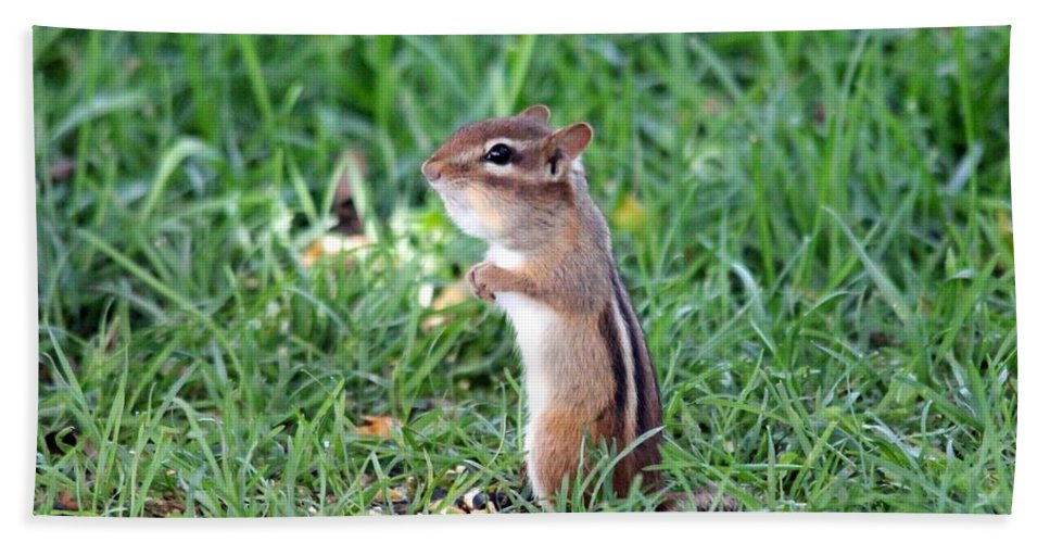 Mccombie Beach Towel featuring the photograph Chipmunk by J McCombie