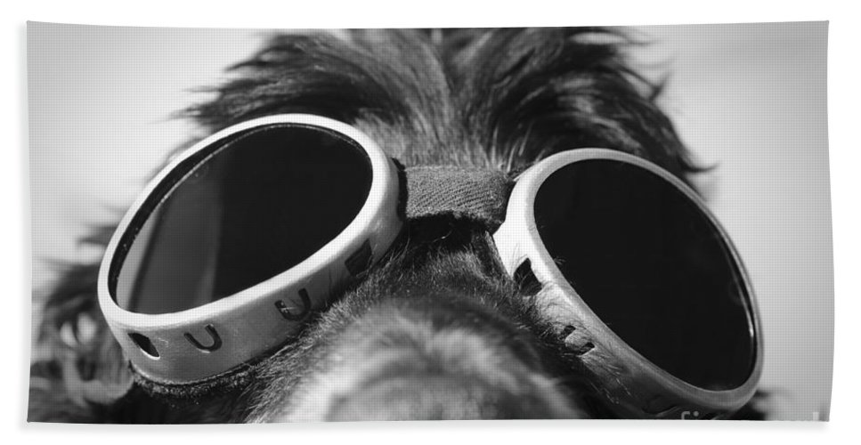 Dog Beach Towel featuring the photograph Cool Dog by Mats Silvan