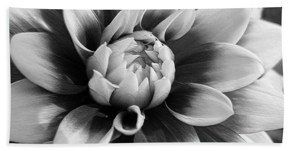 Dahlia Beach Towel featuring the digital art Dahlia Named Mystery Day by J McCombie