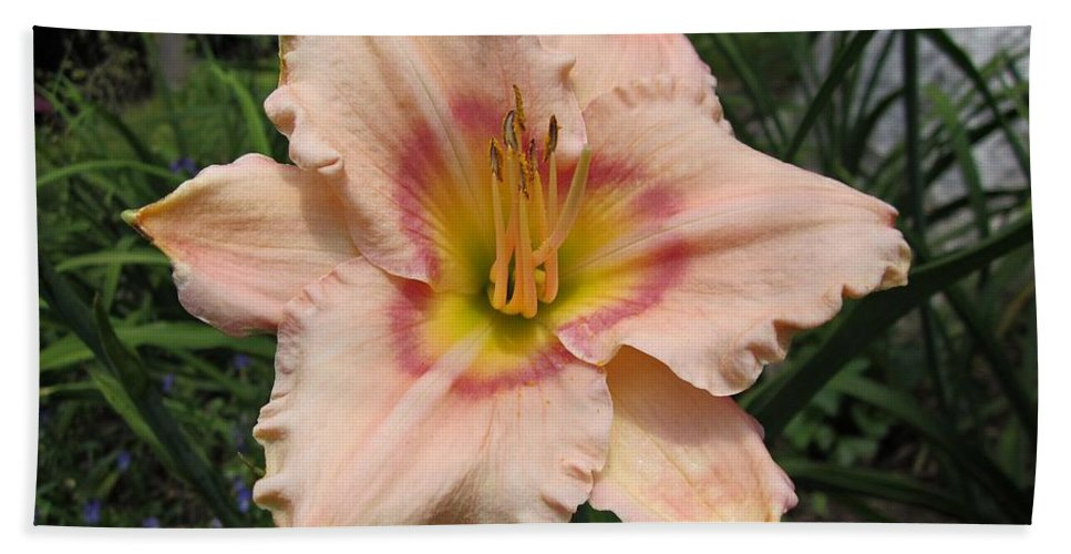 Eye Declare Daylily Beach Towel featuring the photograph Daylily by MTBobbins Photography
