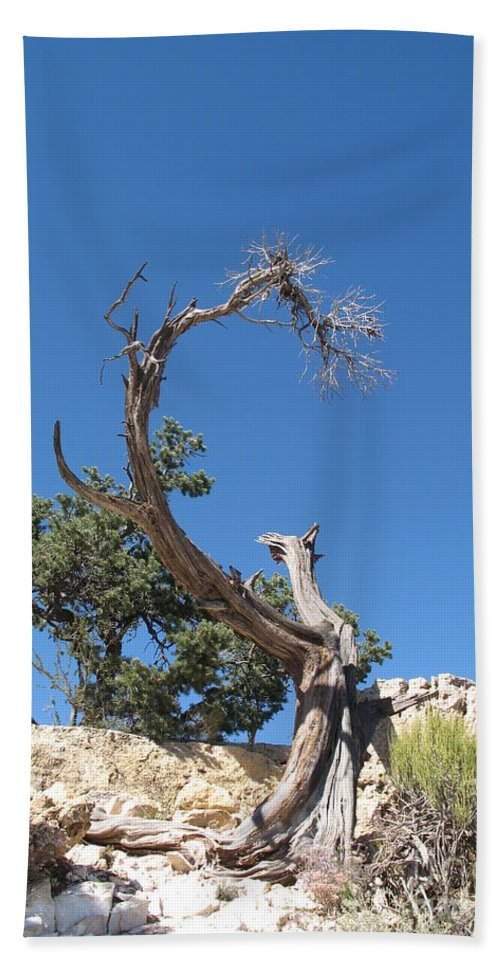 Tree Beach Towel featuring the photograph Dead Tree At Grand Canyon by Christiane Schulze Art And Photography