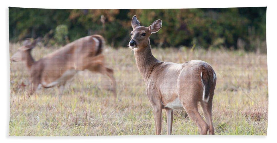 Deer Beach Sheet featuring the photograph Deer At Paynes Prairie by Paul Rebmann