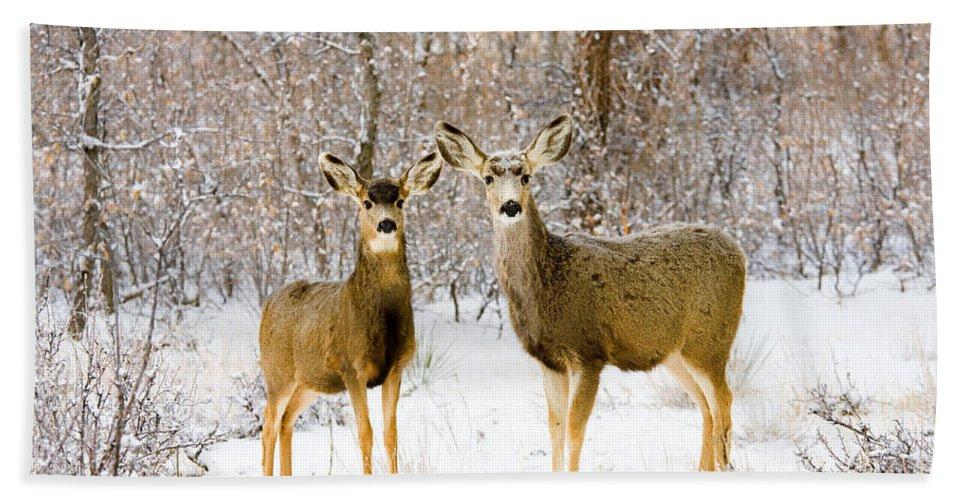 Mule Deer Beach Towel featuring the photograph Deer In The Snowy Woods by Steve Krull