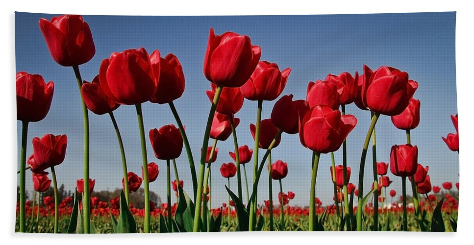 Tulips Beach Towel featuring the photograph Field Of Red Tulips by Athena Mckinzie