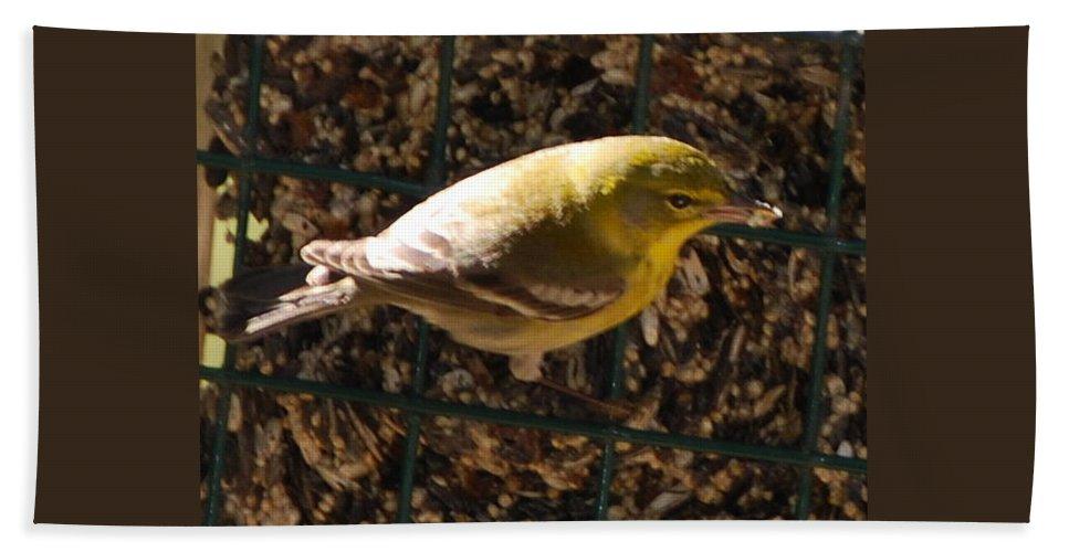 Feeding At My Bird Cake Beach Towel featuring the photograph Finch by Robert Floyd