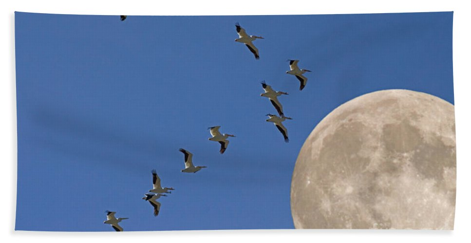 Pelicans Beach Towel featuring the photograph Flying To The Moon by J L Woody Wooden