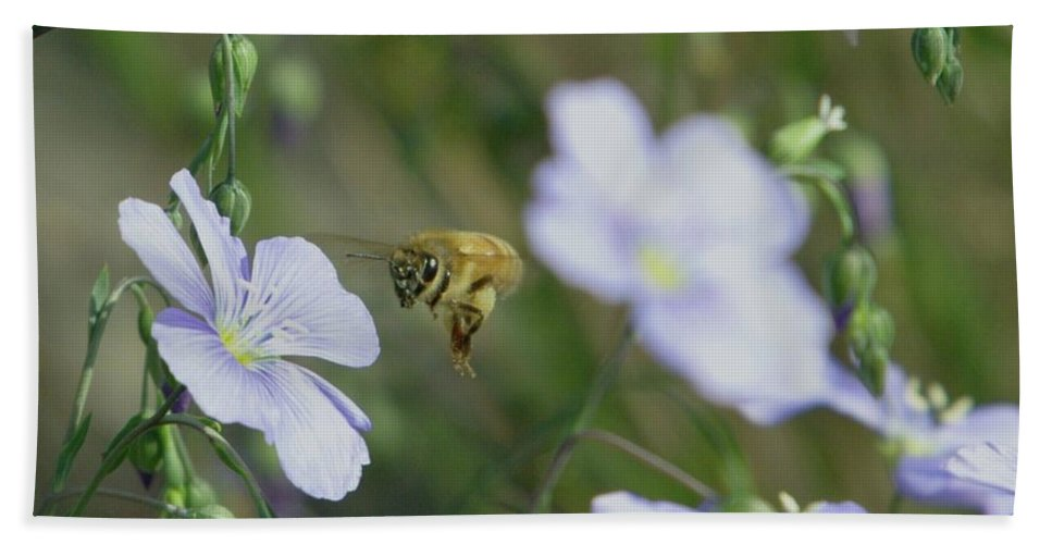 Bees Beach Towel featuring the photograph Honeybee At Work by Jeff Swan