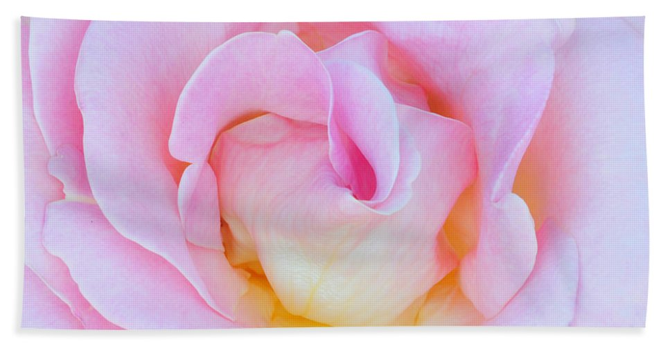Rose Beach Towel featuring the photograph In Pink by Dave Mills