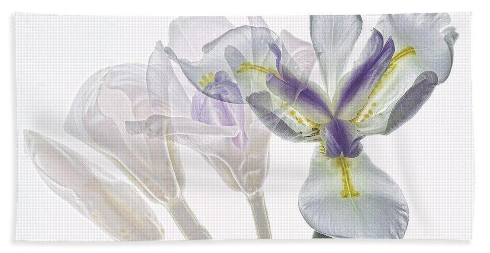 Iris Beach Towel featuring the photograph Iris Evolution by James Ekstrom