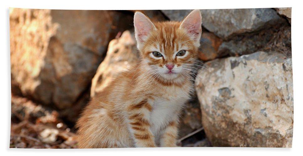 Cat Beach Towel featuring the photograph Kitten In Hydra Island by George Atsametakis