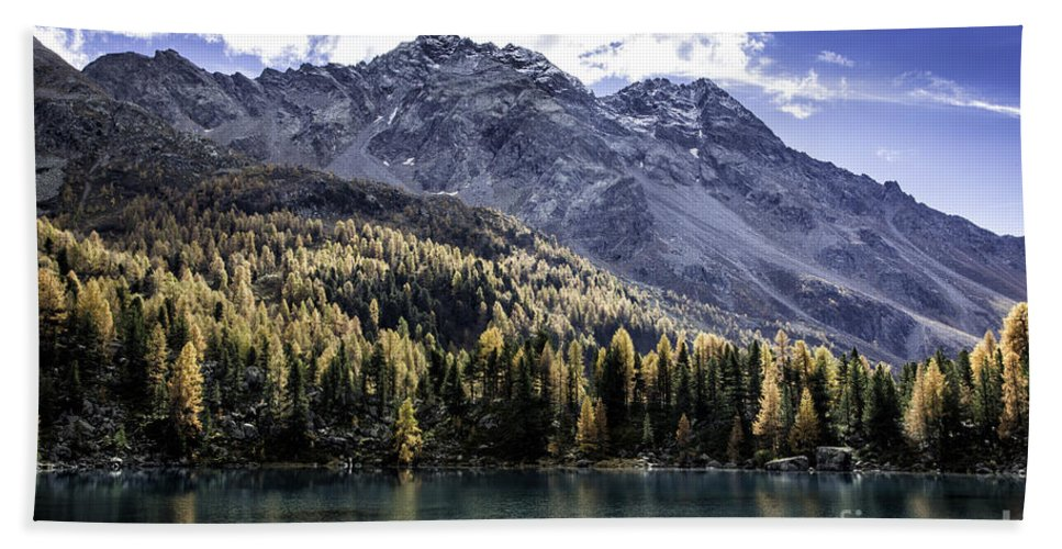Pontresina Beach Towel featuring the photograph Larch Pine Reflections by Timothy Hacker