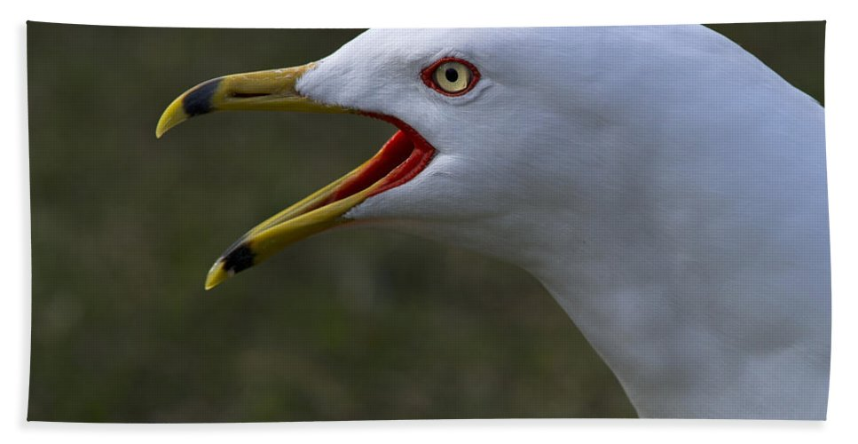 Festblues Beach Towel featuring the photograph Larus Delawarensis... by Nina Stavlund