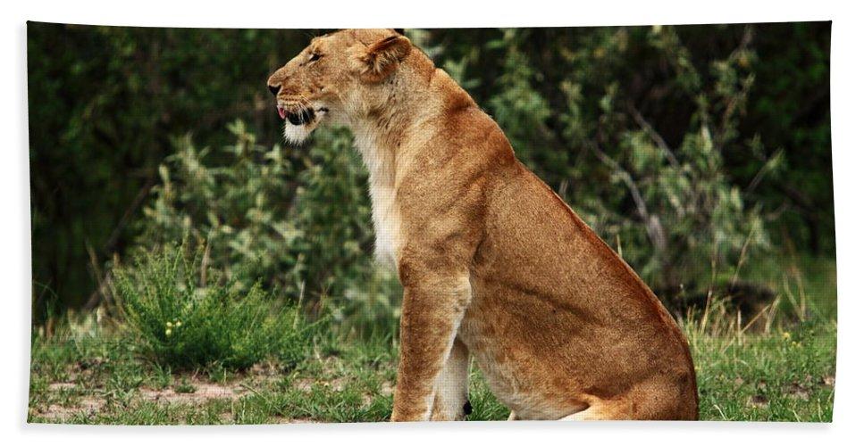 Lion Beach Towel featuring the photograph Lioness On The Masai Mara by Aidan Moran