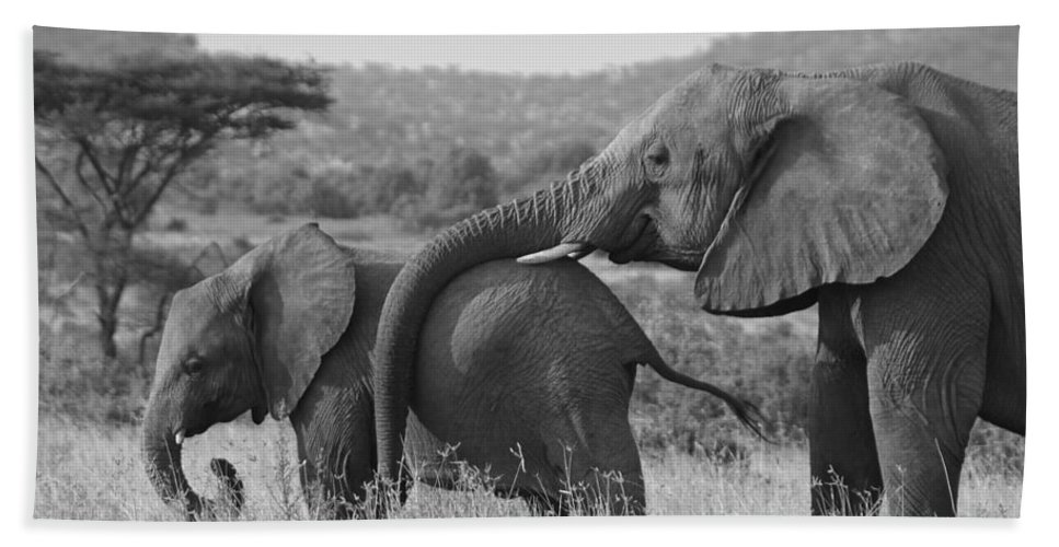 Africa Beach Towel featuring the photograph Maternal Love by Michele Burgess