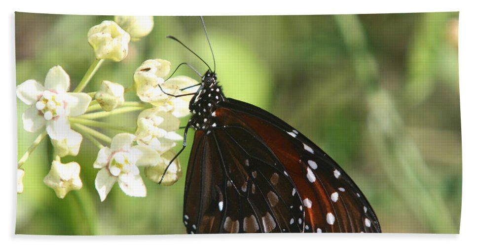 Butterfly Beach Towel featuring the photograph Monarch Butterfly by Christiane Schulze Art And Photography