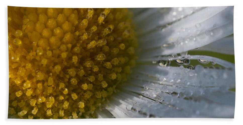 Herbaceous Perennial Plant Beach Towel featuring the photograph Mornings Dew by Jeff Folger