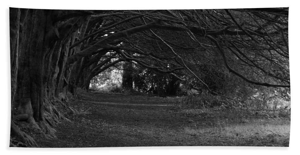 Black And White Beach Towel featuring the photograph Mystical Yew Trees 1 by Denise Mazzocco