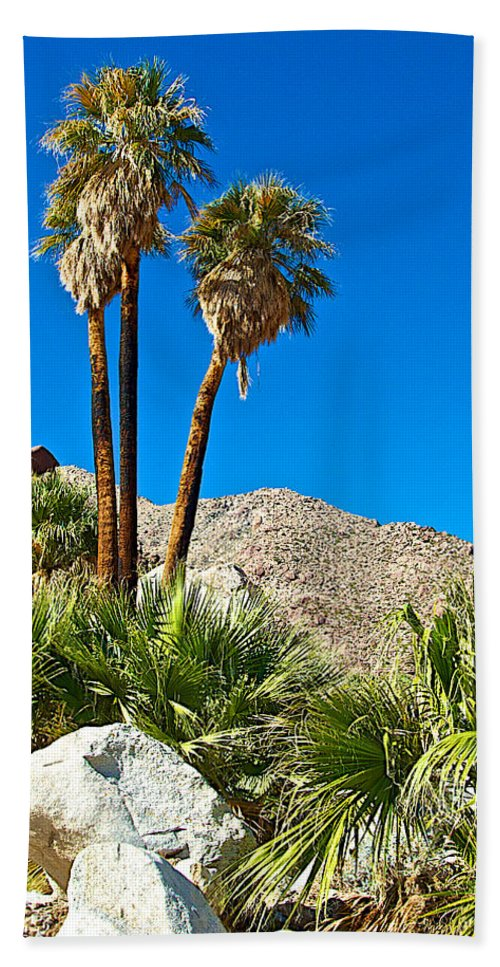 Palm Oasis On Borrego Palm Canyon Trail In Anza-borrego Desert Sp Beach Towel featuring the photograph Palm Oasis On Borrego Palm Canyon Trail In Anza-borrego Desert Sp-ca by Ruth Hager
