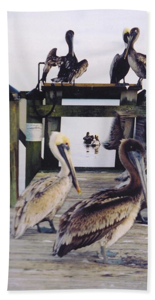 Waiting For A Handout Beach Towel featuring the photograph Pelicans by Robert Floyd