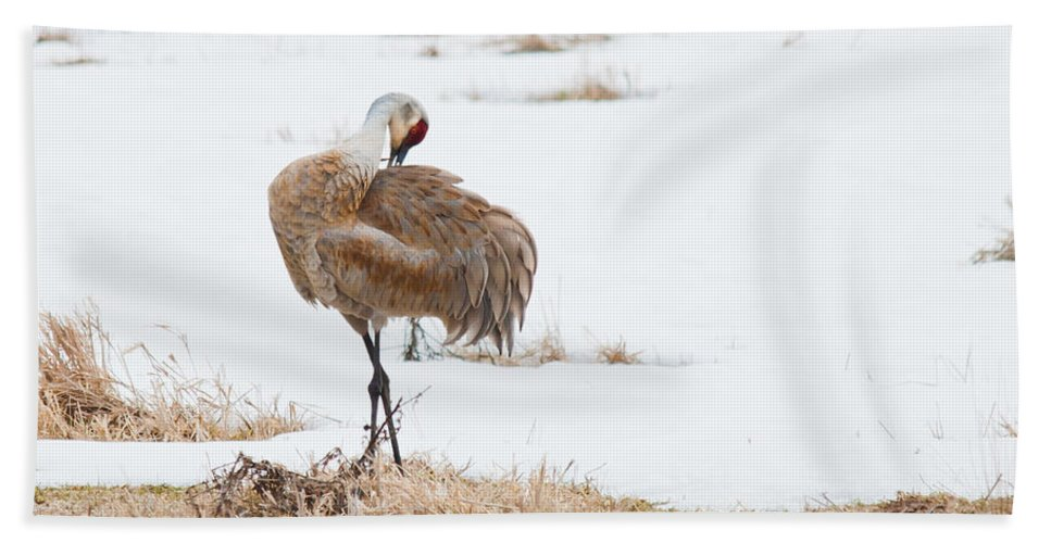 Beach Towel featuring the photograph Preening Crane by Cheryl Baxter