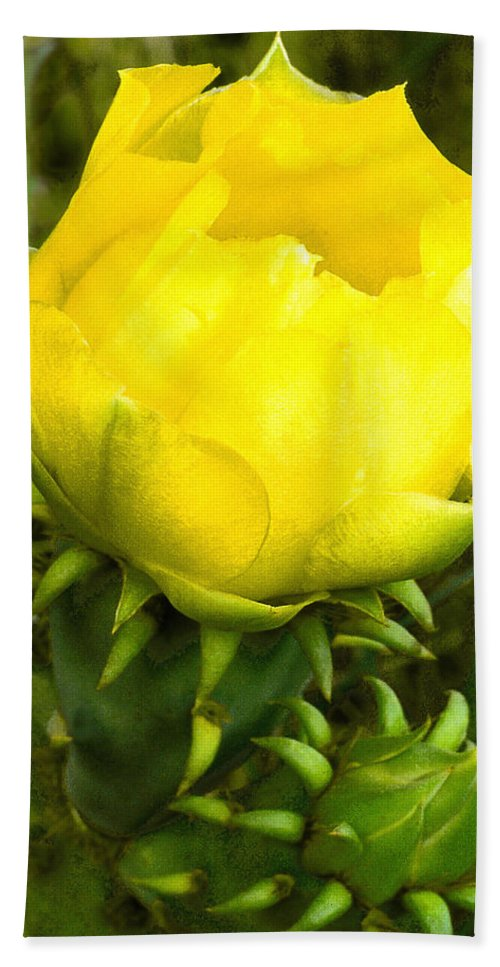 Cactus Beach Towel featuring the photograph Prickly Pear Cactus Bloom by Jim Smith