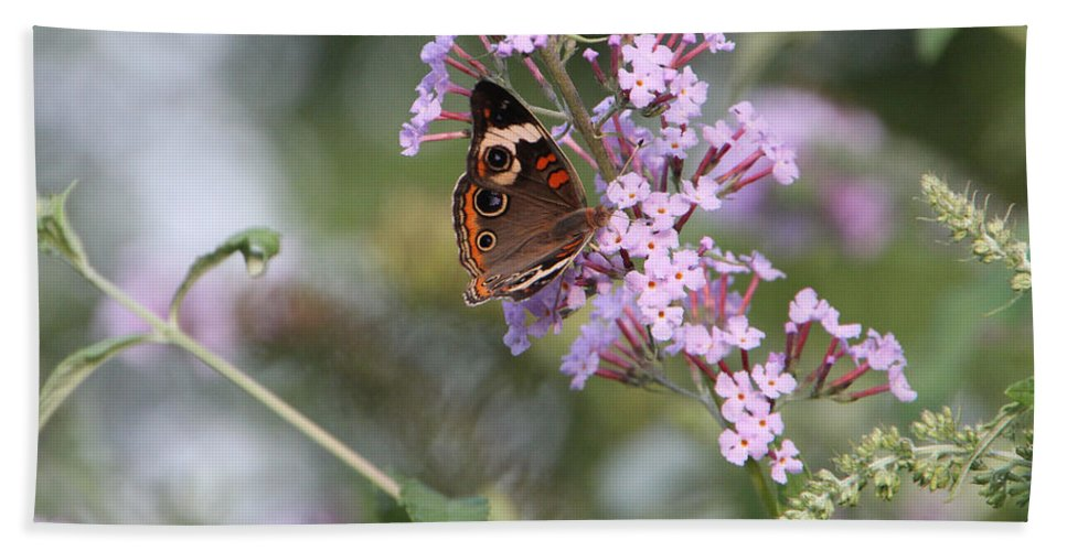 Ohio Buckeye Butterfly Beach Towel featuring the photograph Red Admiral Butterfly by Ericamaxine Price