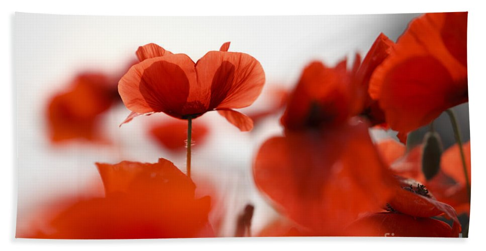 Red poppy flowers beach sheet for sale by nailia schwarz poppy beach sheet featuring the photograph red poppy flowers by nailia schwarz mightylinksfo