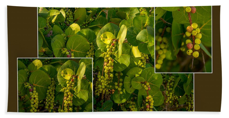 Sea Grapes Beach Towel featuring the photograph Sea Grapes by Nancy L Marshall