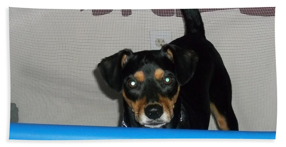 Beach Towel featuring the photograph Shiloh by Kelly Awad