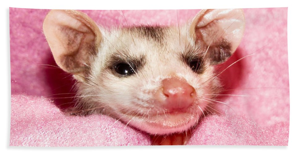 Opossum Beach Towel featuring the photograph Snuggle Bug by Art Dingo