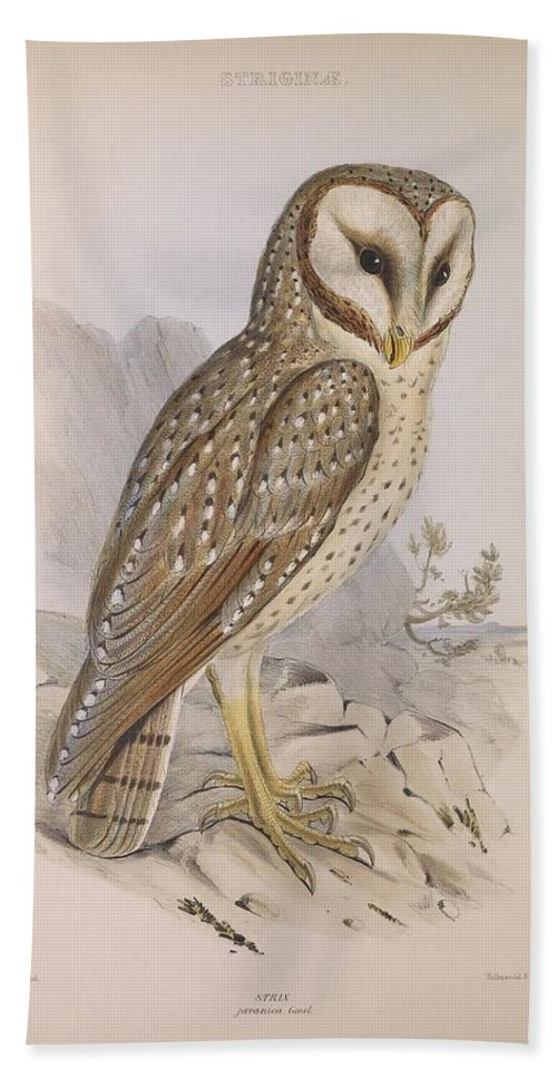 Audubon Beach Towel featuring the painting Strix Owl by Philip Ralley