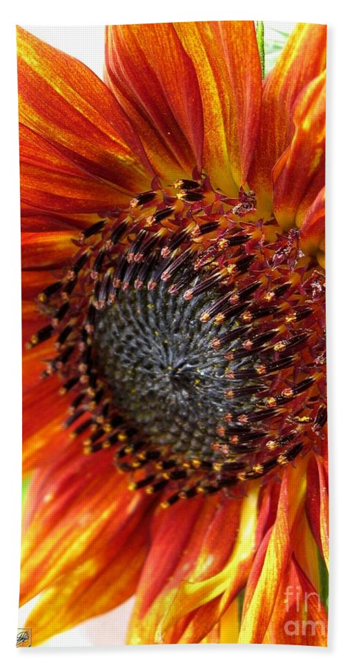 Mccombie Beach Towel featuring the photograph Sunflower From The Color Fashion Mix by J McCombie