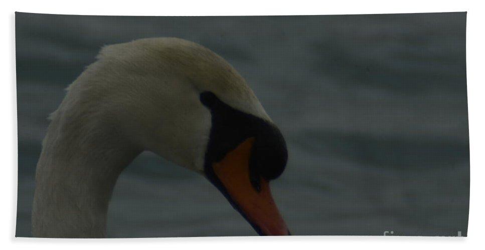 Swan Beach Towel featuring the photograph Swan by Randy J Heath