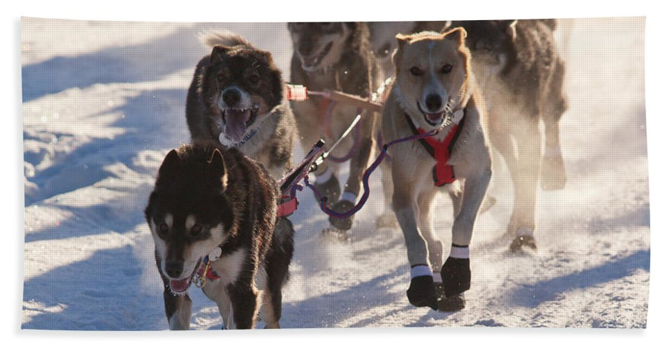 Action Beach Towel featuring the photograph Team Of Sleigh Dogs Pulling by Stephan Pietzko