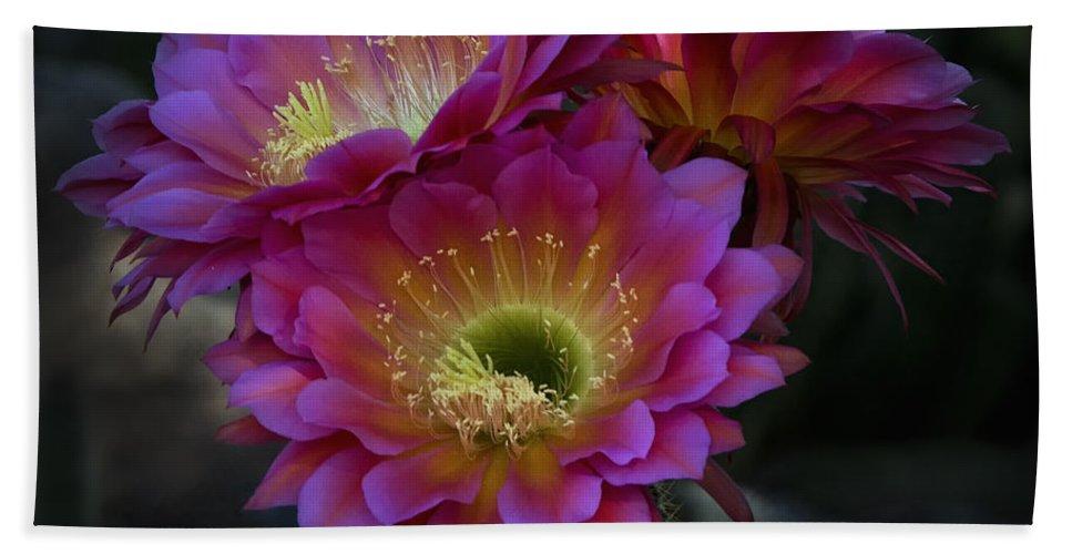 Night Blooming Cactus Beach Towel featuring the photograph The Beauty Of The Desert by Saija Lehtonen