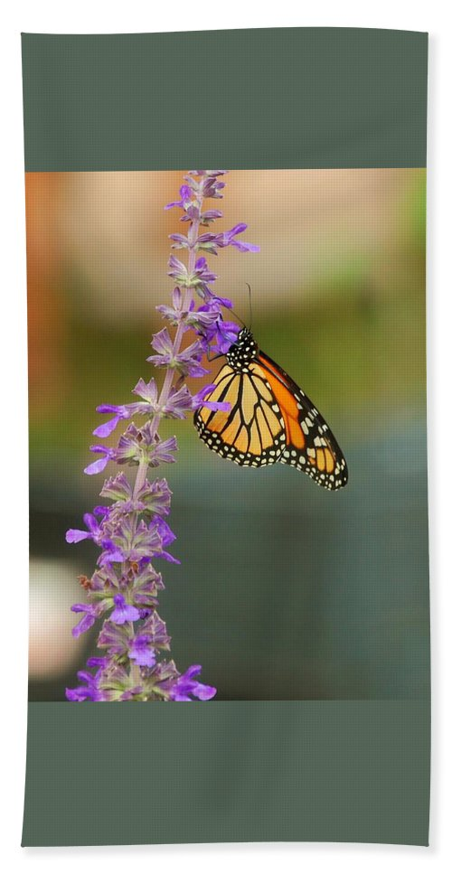 Monarch Beach Towel featuring the photograph The Monarch by Leticia Latocki
