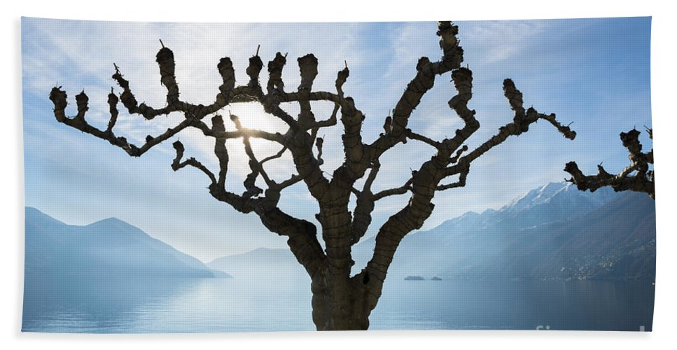 Tree Beach Towel featuring the photograph Tree And Bench by Mats Silvan
