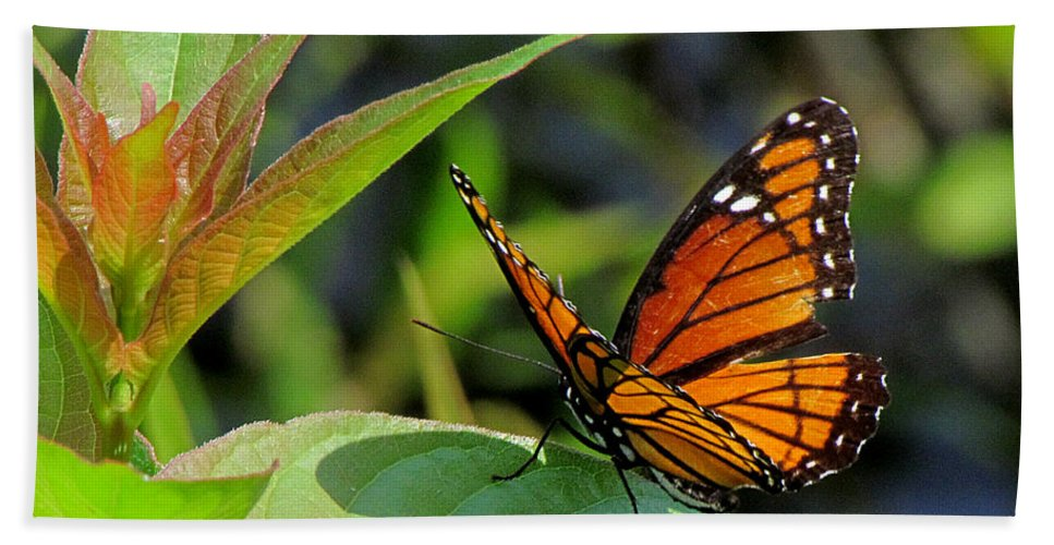 Viceroy Beach Towel featuring the photograph Viceroy 2 by J M Farris Photography