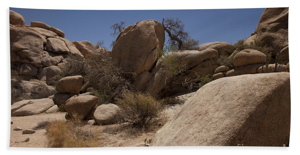 joshua Tree joshua Tree National Park Beach Towel featuring the photograph Waiting by Amanda Barcon