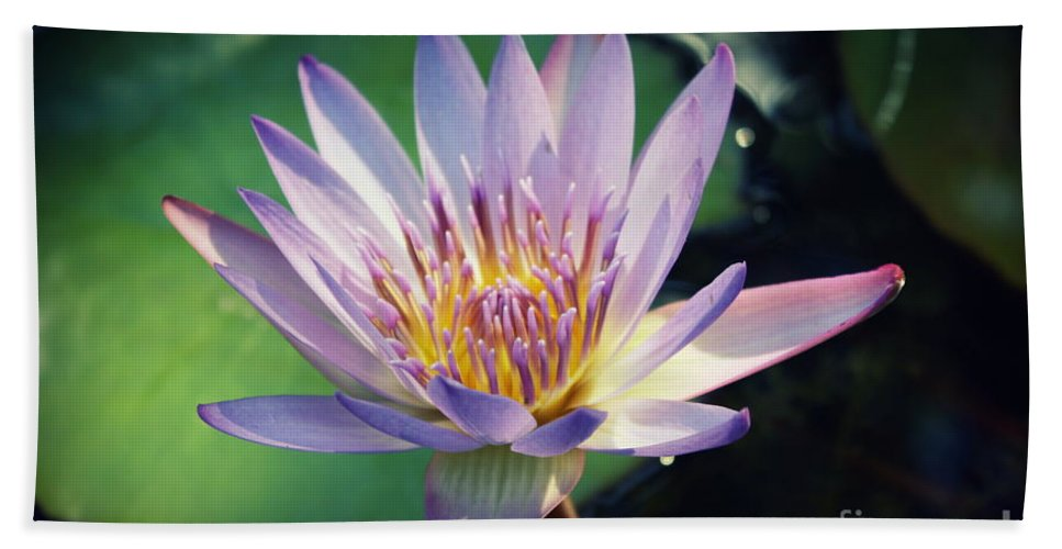 Waterlily Beach Towel featuring the photograph Blue Water Lily by Irina Davis