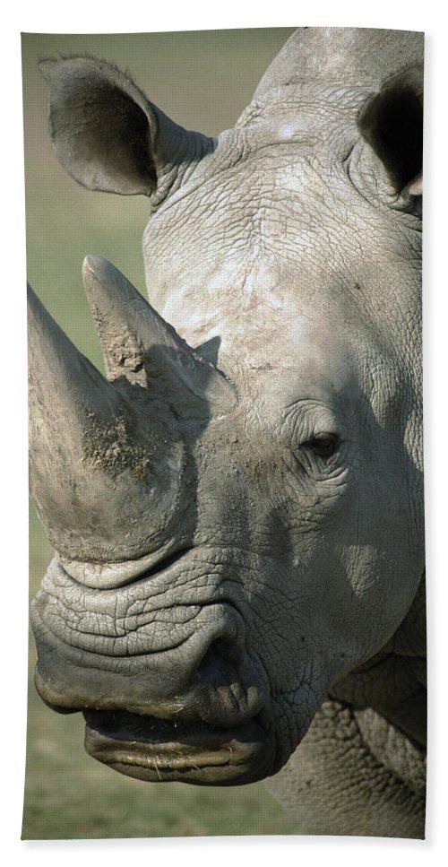 Feb0514 Beach Towel featuring the photograph White Rhinoceros Portrait by San Diego Zoo
